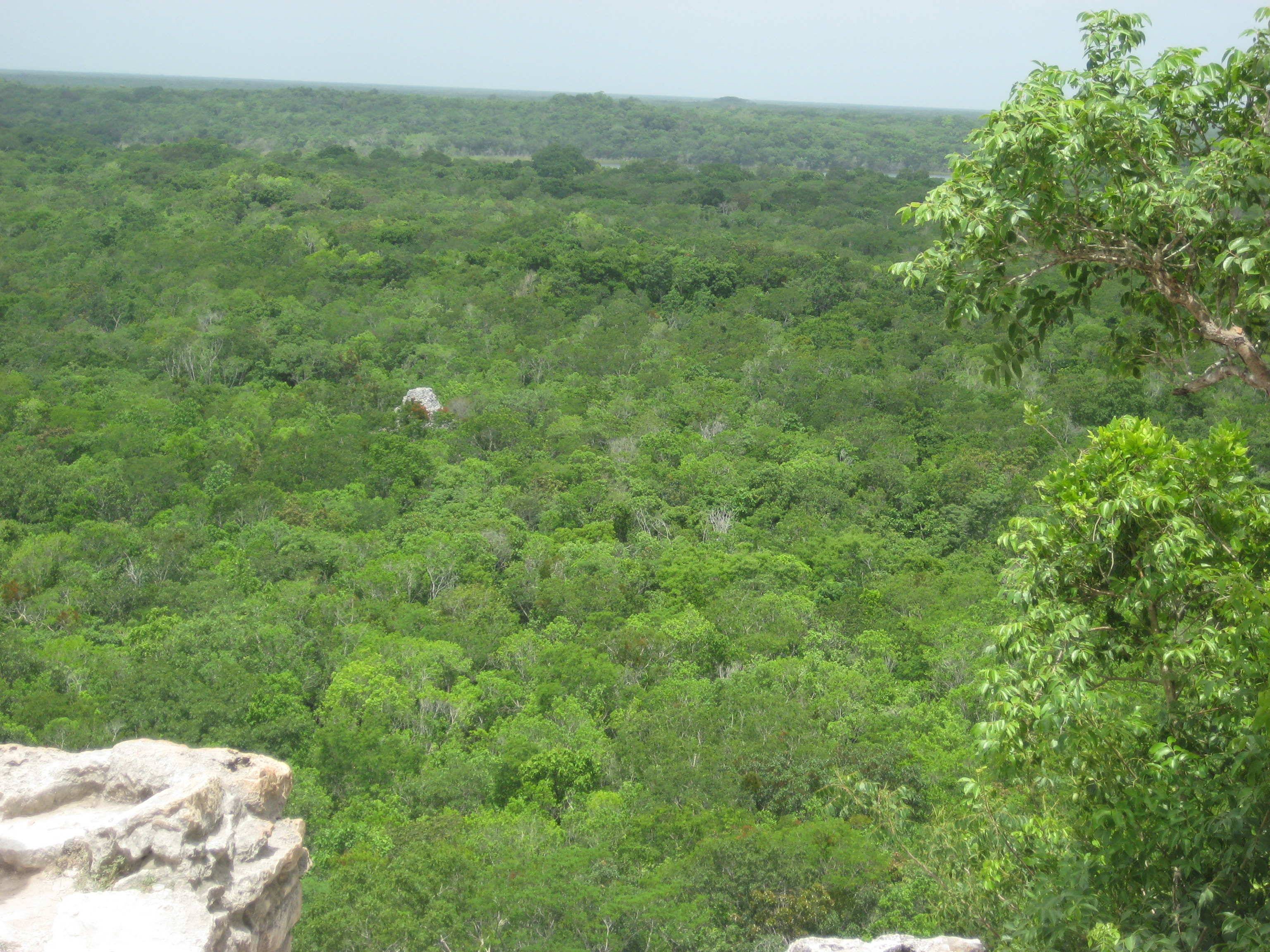 View from top of the pyramid in Coba